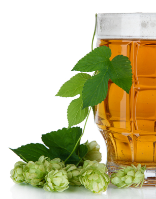 Glass of beer and hops, isolated on white